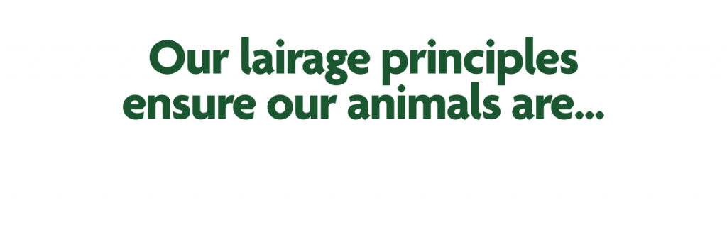 Our lairage principles ensure our animals are..