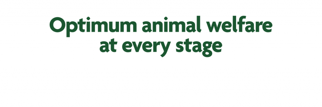 Optimum animal welfare at every stage